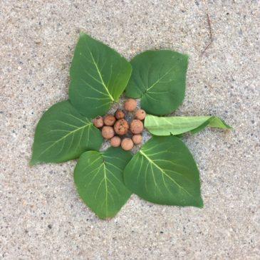 «Leaf art» dans la cour de récréation